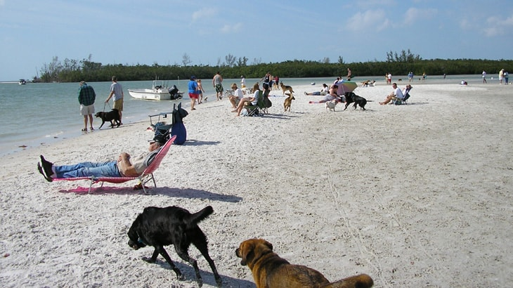 Bonita Dog Beach Park, Fort Myers Florida, Fort Myers beaches, best Florida beaches, Florida beaches