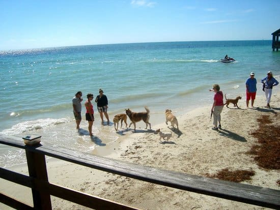Key West Dog Beach, Key West Florida, Best beaches of the Florida Keys, Florida Keys Travel guide, Florida Keys beaches