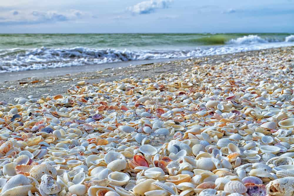 Sanibel Island Beach Shelling, Fort Myers Florida, Fort Myers beaches, best Florida beaches, Florida beaches