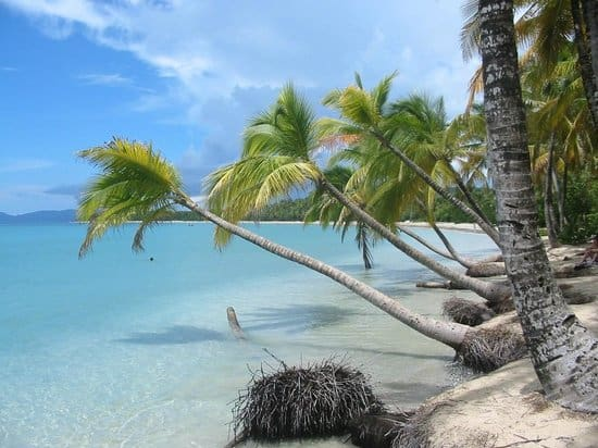 Les Salines Beach, Martinique, best beaches of Martinique, Windward Islands, best beaches of the Windward Islands, Lesser Antilles Vacations, Best beaches of the Lesser Antilles, best beaches in the Caribbean
