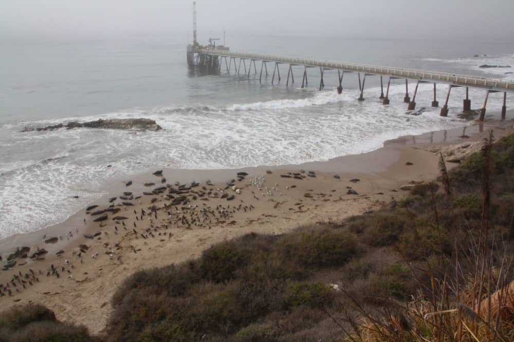 Carpinteria Seal Sanctuary, Best Central California beaches, Santa Barbara County beaches