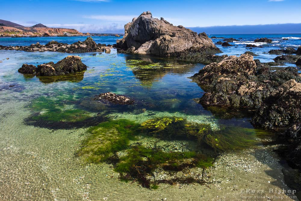 Tide pools at Estero Bluffs State Park