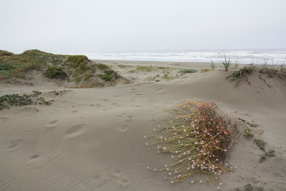 ma-lel-dunes-south-unit-in-arcata