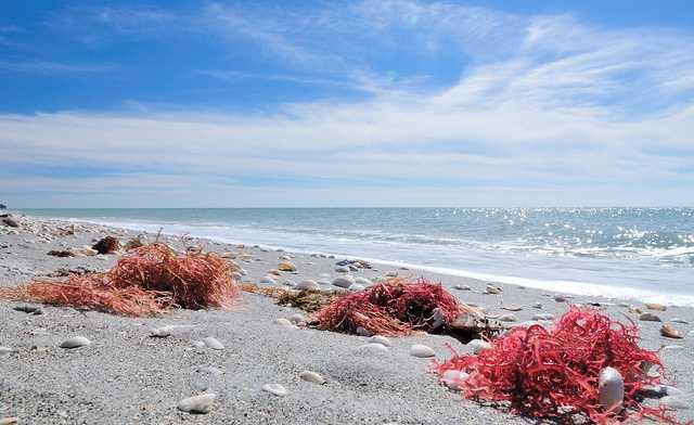 Bowman Beach, Sanibel Florida, Best East Coast Beaches, best beaches, Florida Beaches, Beach Travel Destinations