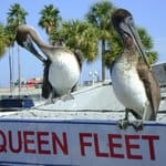 Queens Fleet Deep Sea Fishing, Clearwater Beach Florida, Clearwater Beach Vacation Guide, Clearwater beaches, Florida Beaches