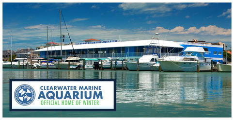 Clearwater Marine Aquarium, Clearwater Beach Florida, Clearwater Beach Vacation Guide, Clearwater beaches, Florida Beaches