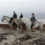 Horses on the Beach, Corpus Christi Texas, Corpus Christi beaches, Corpus Christi Travel Guide, Texas Beaches