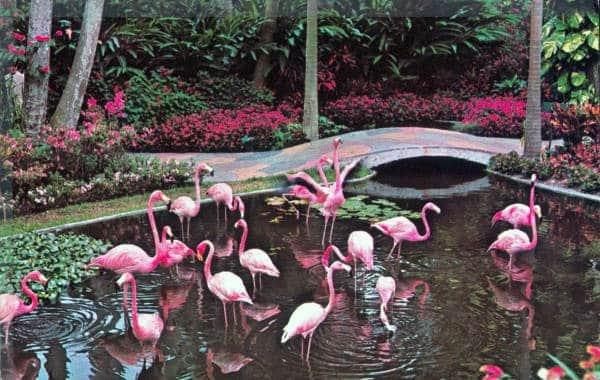 Sunken Gardens, St. Pete Beach, Florida, St. Pete Beach Travel Guide, St. Pete Beaches, things to do in St Pete, best restaurants in St Pete