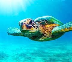 Dry Tortugas Natiional Park, Big Pine Key Florida Keys, Florida Keys beaches, Big Pine Key vacations, Florida Beaches