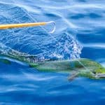 Kay K IV Sport Fishing Charters, Islamorada Florida Keys, Islamorada beaches, Florida Keys Beaches, Islamorada vacations, Florida Beaches