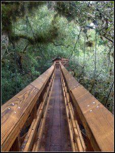 Myakka Canopy Walkway, Sarasota Florida, Sarasota Beaches, Sarasota Florida Travel Guide