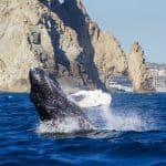Cabo Trek, Cabo San Lucas Whale Watching
