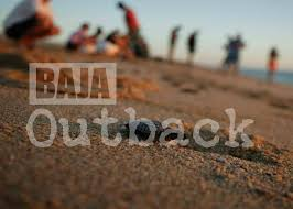 Baja Outback Day Tours San Jose del Cabo, San Jose del Cabo vacations, best beaches of San Jose del Cabo, San Jose del Cabo beaches, best beaches of the Baja, best beaches of the Sea of Cortez