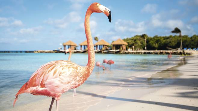 Best All Inclusive Margarita Island