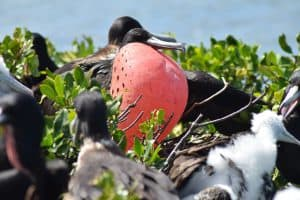 Frigate Bird Sanctuary, Antigua, Leeward Islands, Lesser Antilles, things to do in Antigua, Barbuda beaches, best beaches in the Caribbean, Antigua Beaches