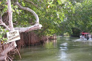 La Restinga Lagoon, Margarita Island, things to do Margarita Island, Isle de Margarita, Leeward Antilles, Lesser Antilles, Margarita Island Travel, Margarita Island beaches