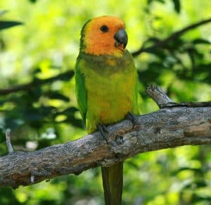 This image has an empty alt attribute; its file name is echo-parrot-sanctuary-300x291.jpg