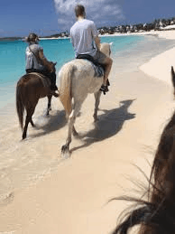 Seaside Stables, Anguilla, Leeward Islands, Lesser Antilles, things to do in Anguilla, Anguilla beaches, best beaches of the Caribbean, Anguilla Island Travel Guide