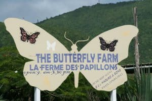 The Butterfly Farm, St. Martin, Lesser Antilles, Leeward Islands, thing to do St. Martin, St Maarten, best beaches of St Martin, Best beaches of the Lesser Antilles, best Caribbean beaches, best St Martin hotels, best St Martin restaurants, St Martin attractions, St Martin Tours