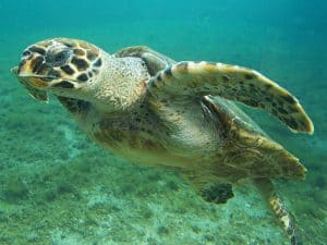 Turtle Sanctuary, Los Roques Venezuela, things to do in Los Roques, Leeward Antilles, Lesser Antilles, Los Roques Travel, Los Roques beaches, best beaches of Caribbean
