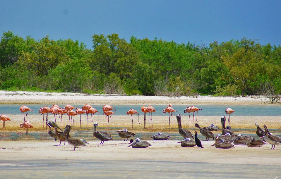 Punta Mosquito, Isla Holbox Mexico, Yukatan Peninsula beaches, best Yukatan Peninsula beaches