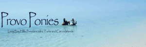 Provo Ponies, Providenciales, Turks & Caicos, Providenciales beaches, Turks & Caicos Beaches, Grace Bay, things to do in Providenciales, best restaurants in Providenciales, best bars in Providenciales