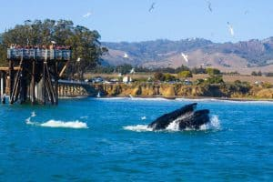The Whale Trail,  Avila Beach California, Avila Beach beaches, things to do in Avila Beach, restaurants in Avila Beach, bars in Avila Beach, California beaches, Central California beaches