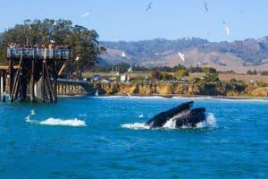 The Whale Trail,  Avila Beach California, Avila Beach beaches, things to do in Avila Beach, restaurants in Avila Beach, bars in Avila Beach, California beaches, Central California beaches