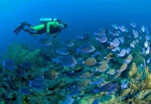 Discover Scuba Dive & Mahahual Beach Experience Shore Excursion, Western Caribbean Cruise Itinerary, Western Caribbean Cruise Ports, Western Caribbean Cruise shore excursions, best cruise deals, cruise deals