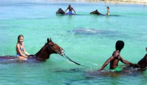 Horseback Riding Adventure Shore Excursion, Western Caribbean Cruise Itinerary, Western Caribbean Cruise Ports, Western Caribbean Cruise shore excursions, best cruise deals, cruise deals