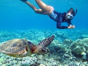 Snorkel at Sea Turtle Sanctuary & Yal-Ku Lagoon Shore excursion, Western Caribbean Cruise Itinerary, Western Caribbean Cruise Ports, Western Caribbean Cruise shore excursions, best cruise deals, cruise deals