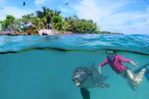 Snorkeling at West Bay Beach Shore Excursion, Western Caribbean Cruise Itinerary, Western Caribbean Cruise Ports, Western Caribbean Cruise shore excursions, best cruise deals, cruise deals