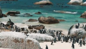 Boulders Beach, Camps Bay Beach South Africa, South Africa beaches, thins to do in Camps Bay, best hotels in Camps Bay, best restaurants in Camps Bay, Camps Bay attractions, top beaches in the world