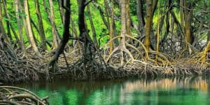 Damas Island Mangroves, Manuel Antonio Park Costa Rica, best Costa Rica beaches, top beaches in the world, world's best beaches, things to do in Manuel Antonio, best hotels in Manuel Antonio National Park, best restaurants in Manuel Antonio National Park