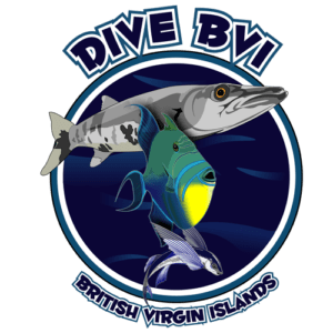 Dive BVI, British Virgin Islands beaches, The Baths Virgin Gorda, Virgin Gorda beaches, things to do in Virgin Gorda, best restaurants in Virgin Gorda, best hotels in Virgin Gorda, best bars in Virgin Gorda, top beaches in the world