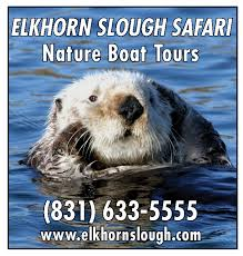 Elkhorn Slough Safari Nature Boat Tours, Best Central California beaches, Sand City Beaches, things to do in Sand City, best restaurants in Sand City, best bars in Sand City, California beaches