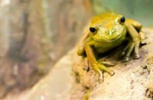 Frog Pond Wetland Preserve, Seaside California Travel, best central California beaches, California beaches, Seaside beaches, things to do in Seaside, best restaurants in Seaside, best bars in Seaside, best hotels in Seaside, Seaside beaches