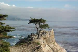 Lone Cypress, Pebble Beach California, Pebble Beach Beaches, Central California beaches, best California beaches, things to do in Pebble Beach, best restaurants in Pebble Beach, best hotels in Pebble Beach, best bars in Pebble beach, Visit Pebble Beach California