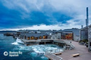 Monterey Bay Aquarium, Best Central California beaches, Sand City Beaches, things to do in Sand City, best restaurants in Sand City, best bars in Sand City, California beaches