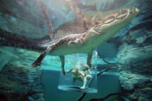 Saltwater Crocodile, Darwin Australia, Australia beaches, Darwin beaches, things to do in Darwin, best hotels in Darwin, best bars in Darwin, Darwin area attractions, best beaches in Australia