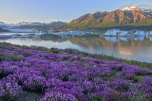 Wrangell-Saint Elias National Park, Yakutat Alaska, Yakutat beaches, surfing in Yakutat, best hotels in Yakutat, things to do in Yakutat, Yakutat Alaska Travel Guide