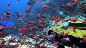 Batu Bolong Reef, Komodo Island Indonesia, Komodo Island beaches, best Indonesia beaches, beach travel, best Komodo Island Hotels, best Komodo Island restaurants, best Komodo Island bars, best things to do in Komodo Island, beach travel destinations, Komodo Island snorkeling