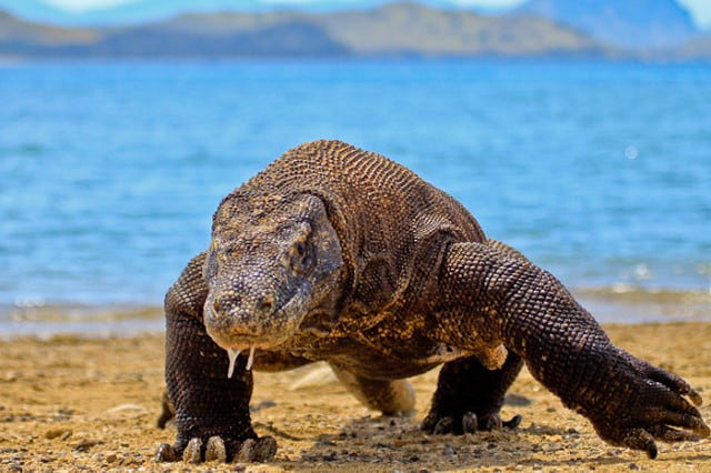 Komodo Island Indonesia, Komodo Island beaches, best Indonesia beaches, beach travel, best Komodo Island Hotels, best Komodo Island restaurants, best Komodo Island bars, best things to do in Komodo Island, beach travel destinations, Komodo Island snorkeling