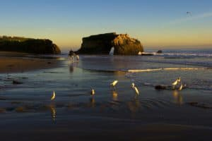 Natural Bridges State Beach, Davenport California, Davenport CA, things to do in Davenport, best hotels in Davenport, Davenport attractions, best restaurants in Davenport, Davenport nightlife, Davenport Beaches, best California beaches, beach travel , beach travel destinations