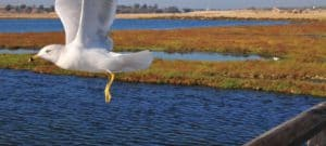 Bolsa Chica Ecological Reserve, Huntington Beach California, California beaches, Huntington Beach CA beaches, things to do in Huntington Beach, best restaurants in Huntington Beach,  best nightlife in Huntington beach, California beaches, best Huntington Beach hotels, beach travel, beach travel destinations
