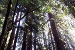 Explore California's Coastal Redwoods, Vacation to Oceanside, Oceanside California, Oceanside beaches, best California beaches, Southern California beaches