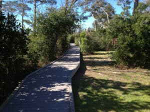 This image has an empty alt attribute; its file name is Brackenridge-Nature-Trail-300x225.jpg