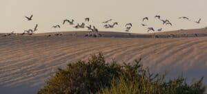 This image has an empty alt attribute; its file name is Corralejo-Natural-Park-300x137.jpg