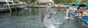 This image has an empty alt attribute; its file name is Island-Dolphin-Care-300x98.jpg