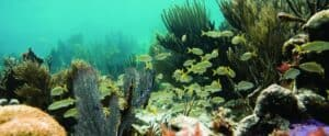 This image has an empty alt attribute; its file name is John-Pennekamp-Coral-Reef-State-Park-300x124.jpg